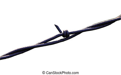 Barbed Wire isolate - A barbed wire fence isolated on white.