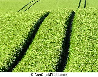 tracks - growing wheat