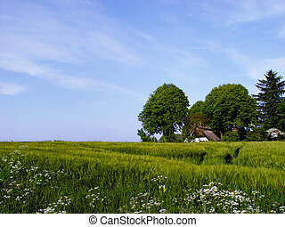 farm - in a fertile surrounding