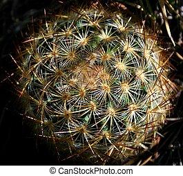 Barrel Cactus 2 - Close-up look at barrel cactus and its...
