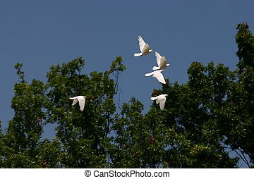 flying white birds