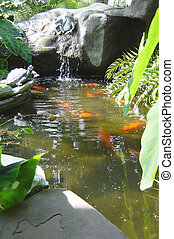 Garden n Pond - Back yard tropical fishpond in southern...
