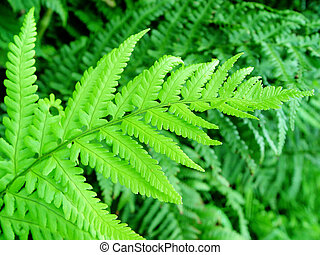 fern - leaf in a forest