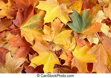 Autumn Leaves - Fallen leaves in a park