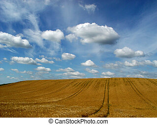 heaven and earth - clouds above a barley field in late...