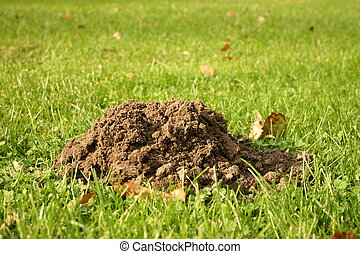 Molehill on gras - A molehill on green gras.