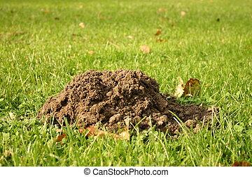 Molehill on gras - A molehill on green gras.