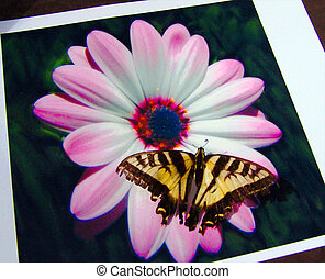 Butterfly photo - A butterfly landed on a photo of a flower...