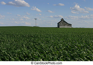 Field - A field in the middle of no where USA.