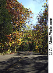 Blacktop & color - A sealed road between fall colored trees
