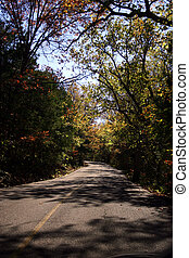 Fall drive - A lovely piece of roadway through trees...