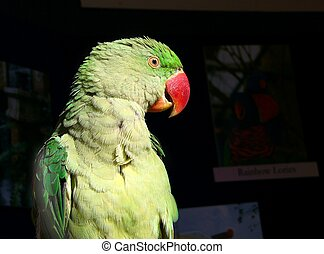 parrot#3 - side view of a parrot