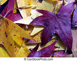 Colorful Leaves - Colorful Fall Leaves