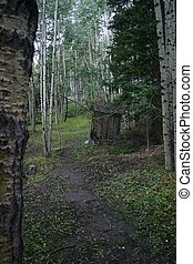 Path to the Privy - Path through lovely aspen forest to the...