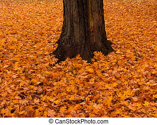 Autumn Splendor - Even when the leaves have fallen there's...