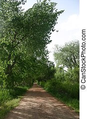 River Walk - Trail through tall stands of cottonwoods by the...