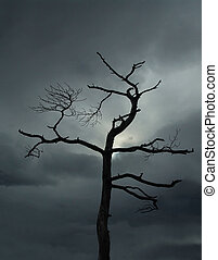 árvore, Morto
