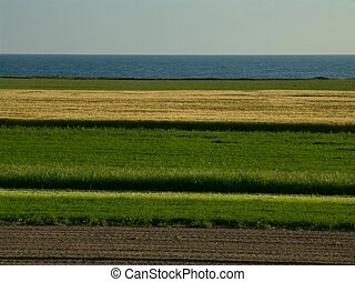 Layers of different crops by the ocean makes an interesting...