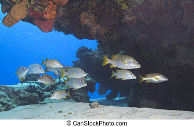 Fish Schooling - This was shot about 40ft underwater at Pasa...