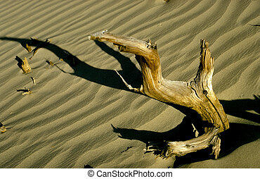 Driftwood - Tree brach in the middle of Death Valley