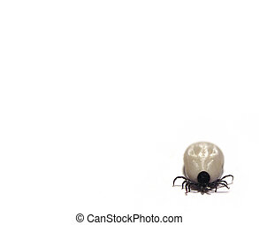 Tick inthe corner - A tick in the lower right corner, room...