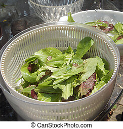 Organic Salad - Fresh garden greens being washed for a salad