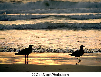 Two Gull Sunset - Two gulls on the beach at sunset