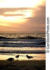 Three Gull Sunset - Three gulls on the beach at sunset