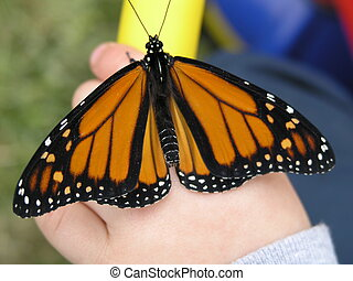 Monarch Butterfly on a toddlers hand