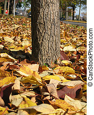ground view - shot at ground level with dead leaves...