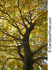 fall fury - The contrast between the very dark branches and...