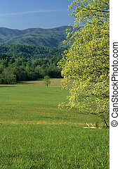 Spring, Cades Cove - Spring Landscape, Cades Cove, Great...