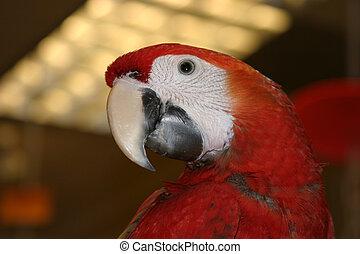 Pássaros, #5
