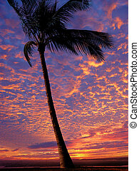 Beach at sunset - Palm tree on the beach at sunset