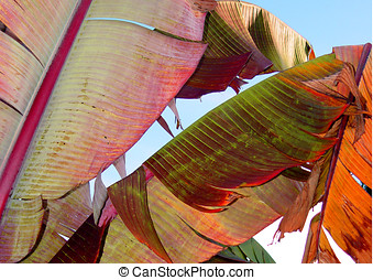 Banana Leaves - Colorful banana leaves