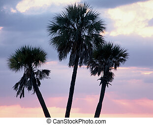 Three palms - palms trees sillouette at sunset