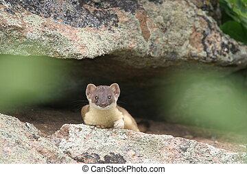 Sly Weasel - Weasel Relaxing