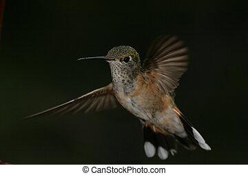 Frozen Hummer - Frozen Hummingbird