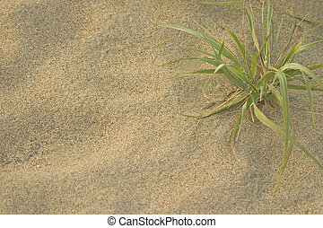 Beach Grass - Macro photograph of sand and beach grass in...