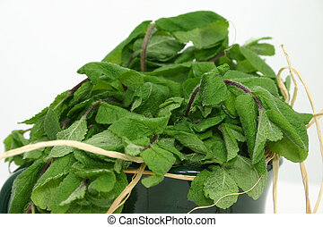 Withering Mint - Close up of withering mint leaves in a...