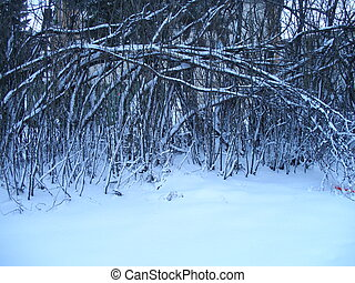 Winter Holiday Card - Snow covered ground, branches bent...