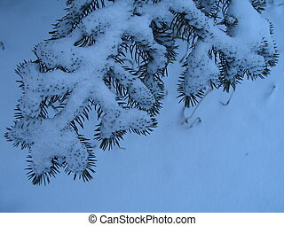 Season Greetings - Snow covered spruce. Plenty of space for...