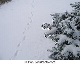 Winter Walk - Footprints in the snow. Taken in Edmonton,...