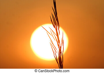 grain in silhouette at sunset