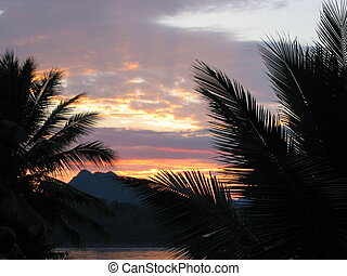 Palm tree sunset - The sun setting over the Mekong and the...