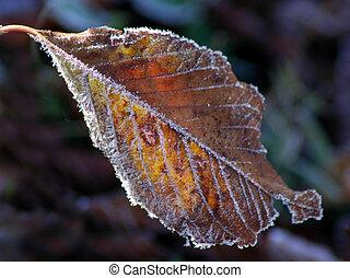 Fall leaf - Frost on a leaf