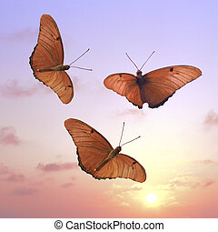 Flying into the Sun - 3 butterflies at sunset