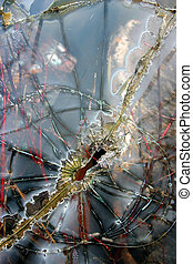 Broken Glass - Broken Automotive Glass