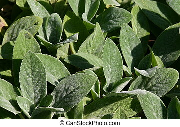 Living Leaf Pattern - Some groundcover plants photographed...