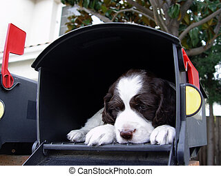 Cute puppy in the mailbox